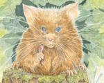 Mouse Has and Qwie, Picture Book Childrens Story and Wonderful Art